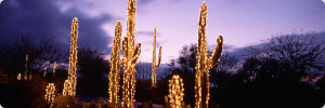 christmas-lights-desert2